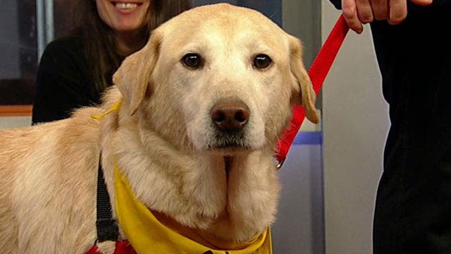 Helping pets in need after natural disasters