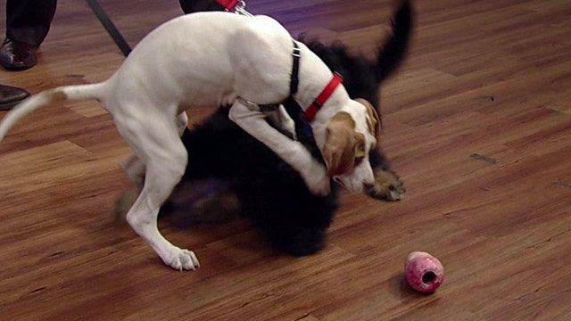 Best ways to train your new puppy