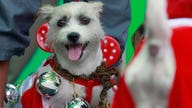 Perfect Gifts for Your Pets this Holiday