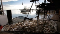 New England fishermen hurt by warm waters, prices could spike