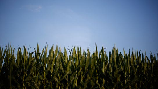 Here's How Some Firms Will Benefit from Falling Corn Prices