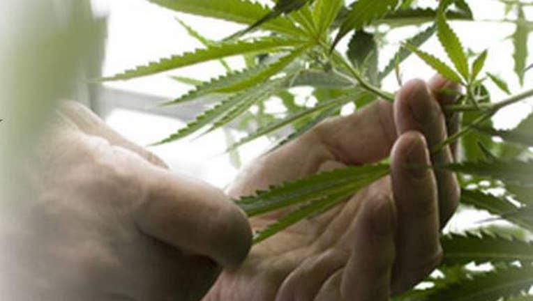 A Huge Breakthrough For Medical Marijuana