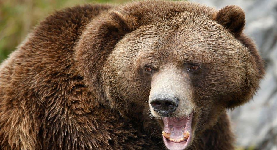 5 Stock Markets Mauled By the Bear