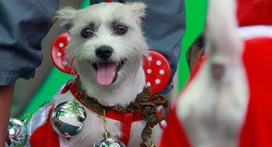 holiday pet, dog, christmas pet, pet toy, puppy