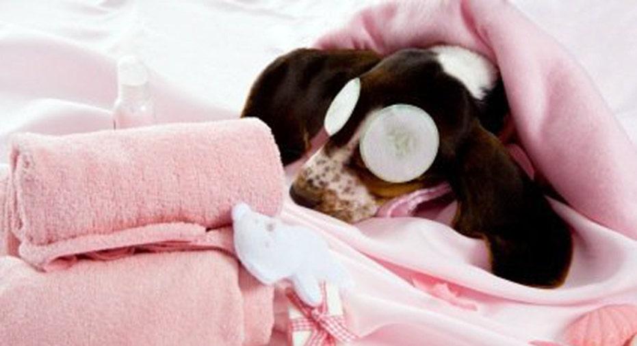 Dog Spa Eyes, PF Slideshow