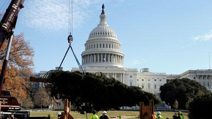 Trump to light National Christmas tree Thursday as Rockefeller Center, Capitol Hill & LA trees ring in season