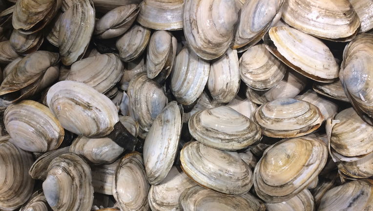 Steamers out of steam? Beloved bivalves aren't happy clams