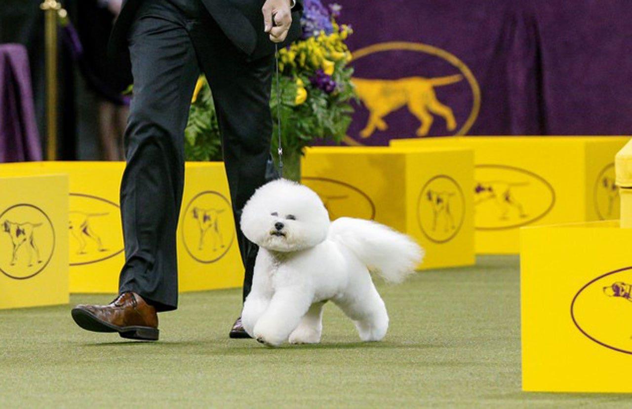 Prestigious Dog Breeds