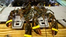 US lobster catch headed for decline, not crash, scientists say