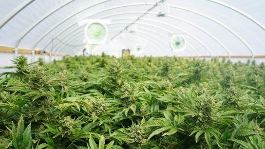CBD regulation will keep criminals from contaminating the marijuana plant: Canopy Growth CEO