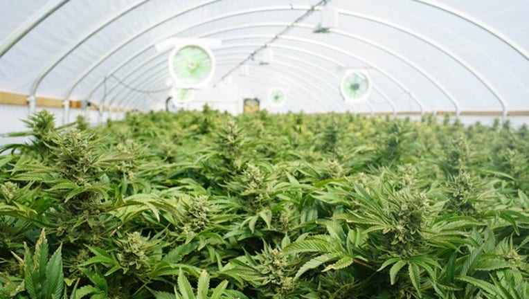 Who Cares What Jeff Sessions Does? These Marijuana Stocks Should Soar