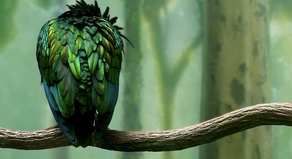 Birdona Branch