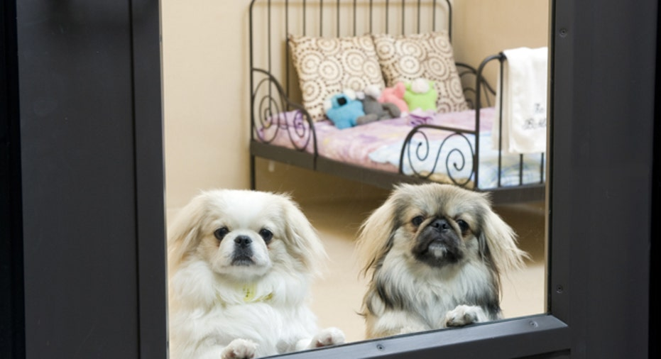 Dogs Retouched Spa, Slideshow