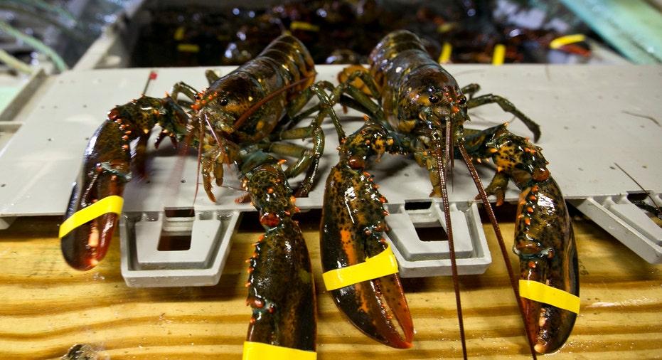 Maine Lobster AP FBN