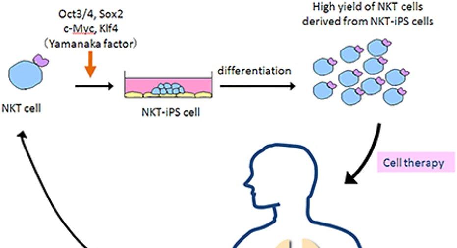 Targeting Tumors