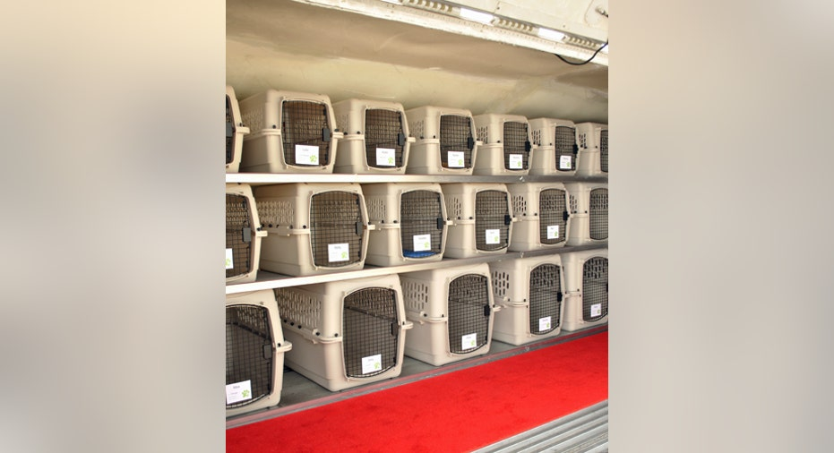 Pet Airways Inside Plane, PF Slideshow