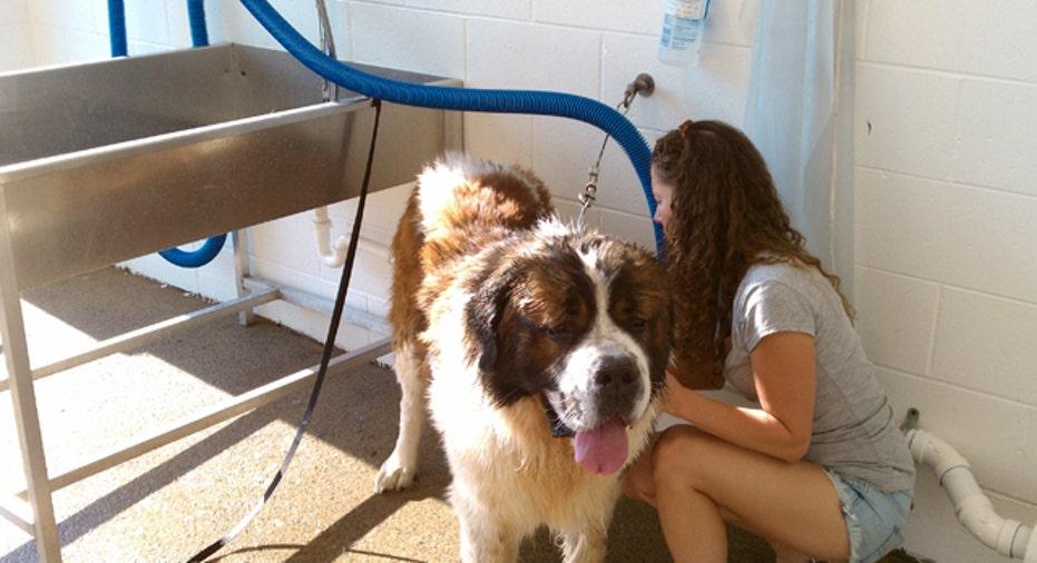 Pet Wash Bubbles Galore