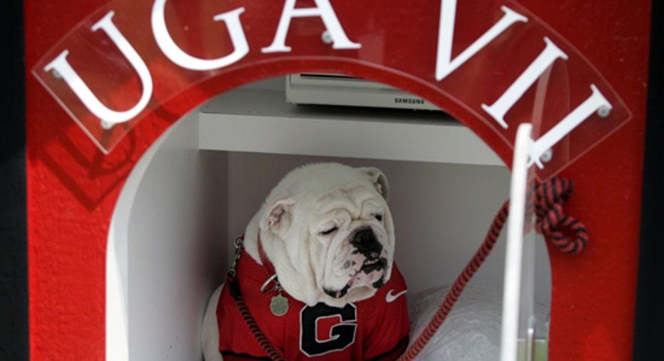 University Georgia Mascot, PF Slideshow