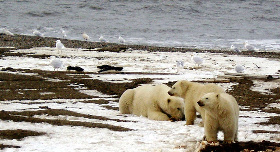 Artic Drilling  Reuters/U.S. Fish and Wildlife Service