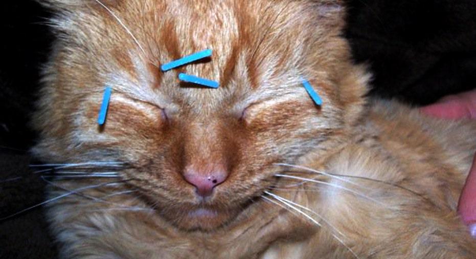 Cat Acupuncture Care. PF Slideshow