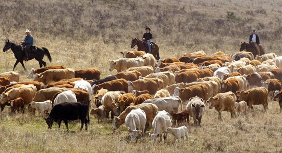 Cattle Herd, Personal Finance Slideshow