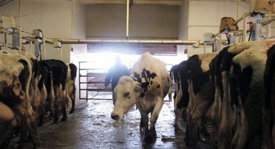 dairy_farm