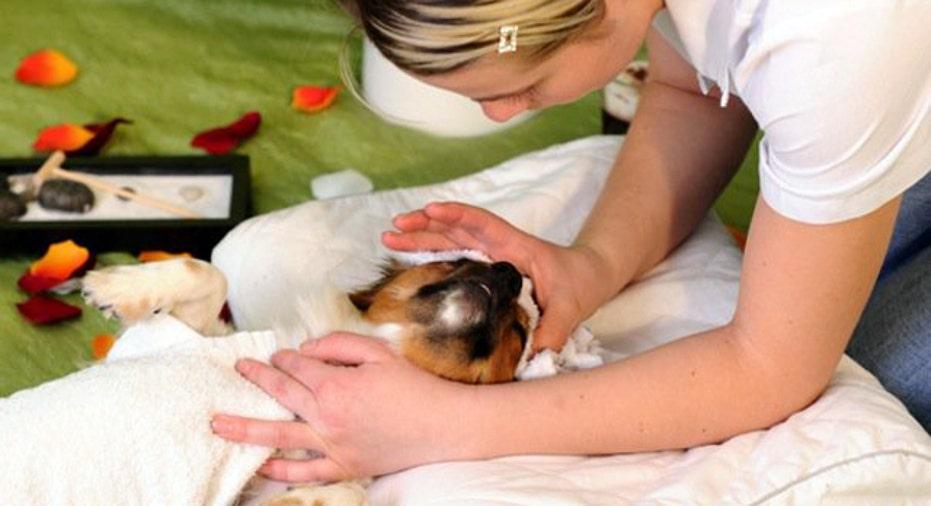 Dog Facial Care, PF Slideshow