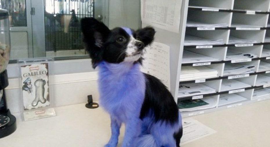 Dog Spa Dyed, PF Slideshow