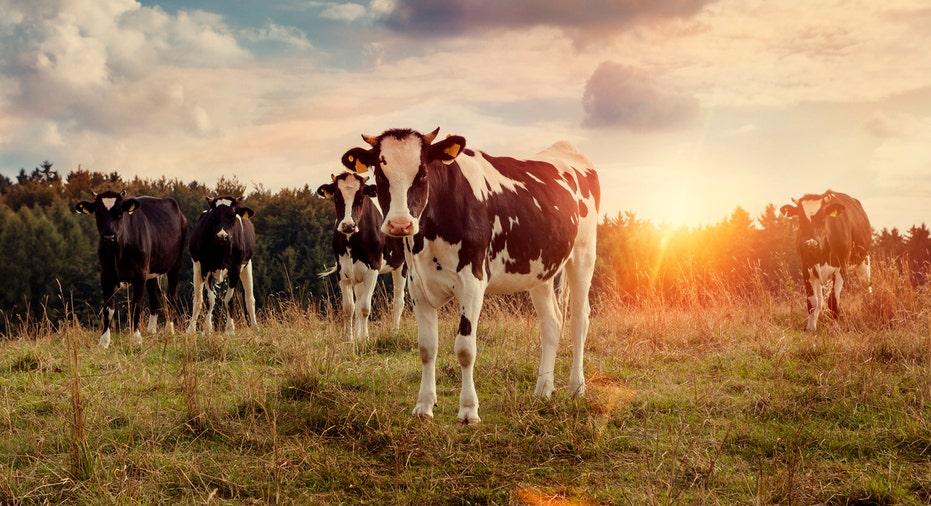 Cow Farm FBN
