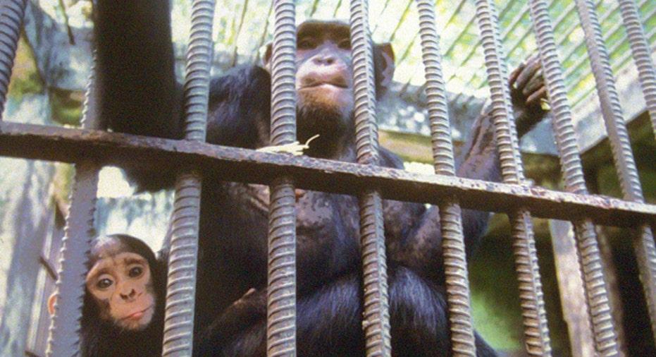 Monkey Cage, zoo