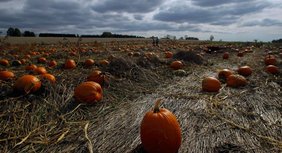 pumpkins, pumpkin picking, pumpkin harvest