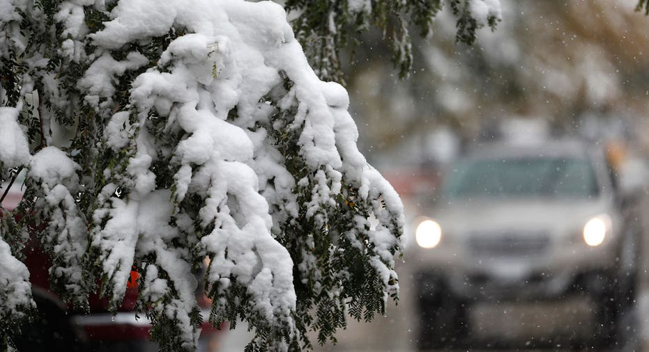 Snow on tree branch, winter, snowstorm AP FBN