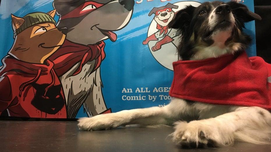 dog, comic con, piggy