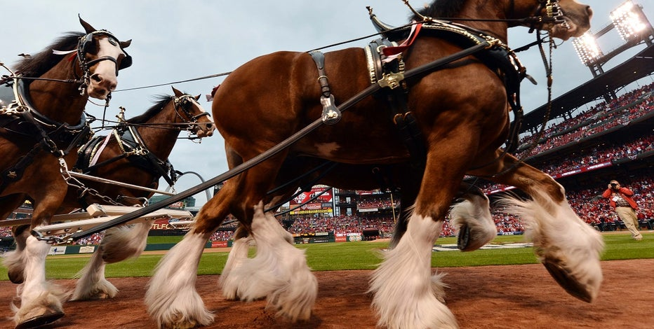 Budweiser just released its super bowl lii ad heres a look fox but he said does understand how important the companys super bowl commercials are to some of its die hard fans adding that classic clydesdale commercials aloadofball Choice Image