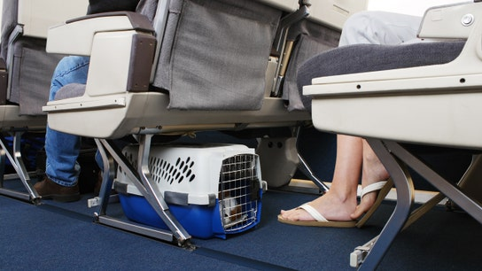 United Airlines carry-on pet policy: How it stacks up with other US carriers