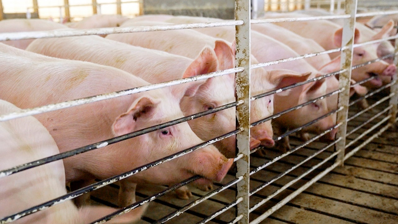 China pork tariffs ruined 'opportunity of a lifetime' for U.S. farmers