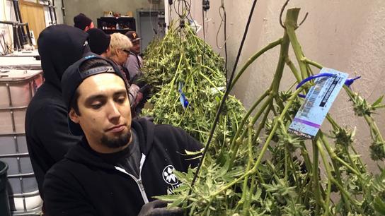 Oregon's struggles tracking pot reflect industrywide problem