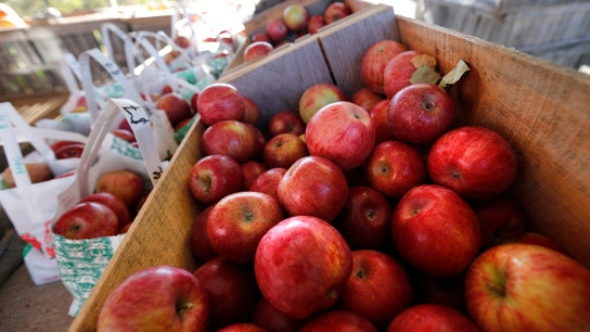 Fruit farmers getting squeezed by labor visa fight