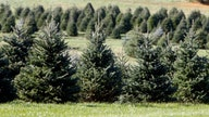 Potential Christmas tree shortage could hit your wallet this holiday season