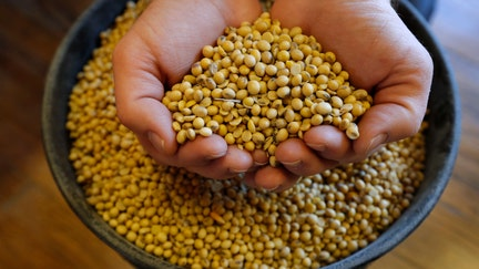 China ramped up US soybean purchases to 20-month high ahead of partial trade deal