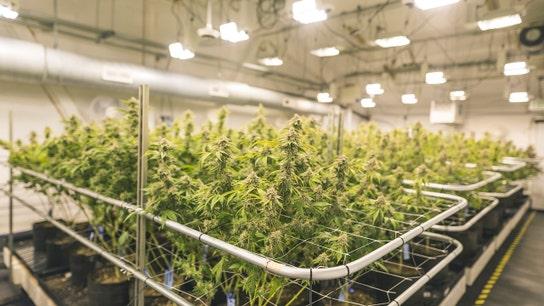 Canada can't grow enough pot