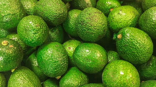 Mexico farmers debunk avocado shortage rumors