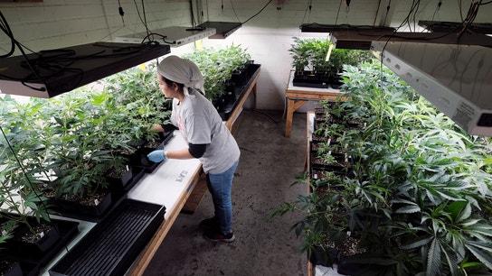 Weaker-than-expected marijuana sales ding California budget