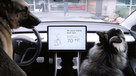 Tesla fixing 'Dog Mode' after owner discovers potentially dangerous issue