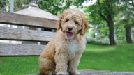 Pet lovers might drool over this investment opportunity