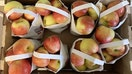 Michigan apples recalled in eight states over possible Listeria concerns