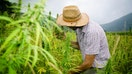 US farmers will soon be able to legally grow hemp as industry eyes expansion