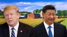 US-China trade war: Beijing won't buy $50B of crops overnight