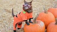 How to keep pets calm on Halloween