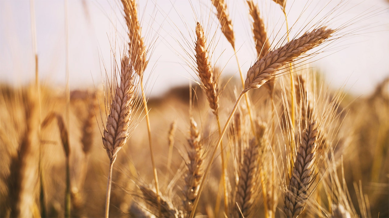 Wheat exports are Trump administration`s latest `win` for...